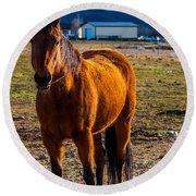 Sunset Bay Horse Heber Valley Utah Round Beach Towel