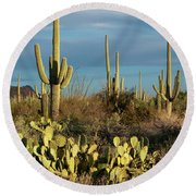 Sunset On The Saguaros Round Beach Towel by Sandra Bronstein