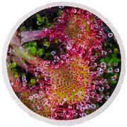 Sundew Round Beach Towel