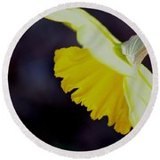 Sunshine Yellow Daffodil Round Beach Towel