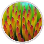 Super Macro Of Echinacea Cone Flower Round Beach Towel