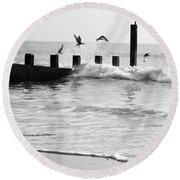 Surprised Seagulls Round Beach Towel