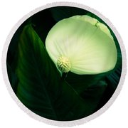Surreal Peace Lily Round Beach Towel