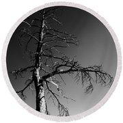 Survival Tree Round Beach Towel
