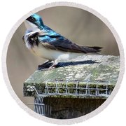 Swallow In The Wind Round Beach Towel