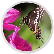 Swallowtail And Azalea - Love Round Beach Towel