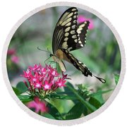 Swallowtail Butterfly 01 Round Beach Towel