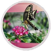 Swallowtail Butterfly 03 Round Beach Towel