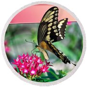 Swallowtail Butterfly 04 Round Beach Towel