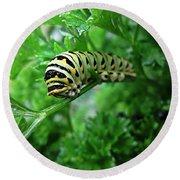 Swallowtail Caterpillar Round Beach Towel
