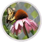 Looking Up At Swallowtail On Coneflower Round Beach Towel