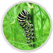 Swallowtail To Be Round Beach Towel