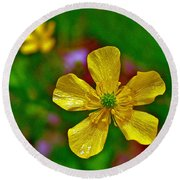 Swamp Buttercup Near Loon Lake In Sleeping Bear Dunes National Lakeshore-michigan  Round Beach Towel