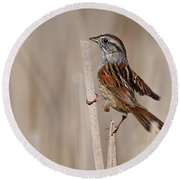 Swamp Sparrow Pictures 17 Round Beach Towel
