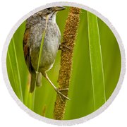 Swamp Sparrow Pictures Round Beach Towel