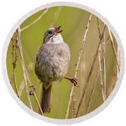 Swamp Sparrow Split Decision Round Beach Towel