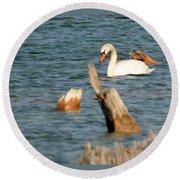 Swan Amid Stumps Round Beach Towel