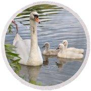 Swan And Chicks Round Beach Towel