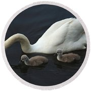 Swan And Signets Round Beach Towel