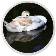 Swan Asleep Round Beach Towel