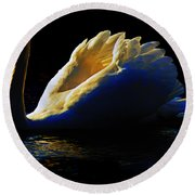 Swan In Golden Light Round Beach Towel
