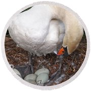Swan Watching Over The Eggs Round Beach Towel