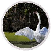 Swan Wings Spread Round Beach Towel