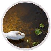 Swan With Sun Reflection On Water. Round Beach Towel