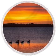 Swans In The Sunrise Round Beach Towel