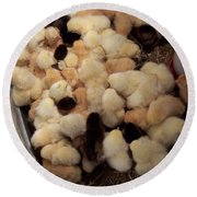 Sweet Baby Chicks For Sale Round Beach Towel