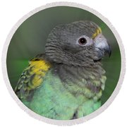 Sweet Baby Meyers Parrot Round Beach Towel
