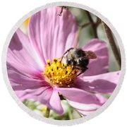 Sweet Bee On Pink Cosmos Round Beach Towel