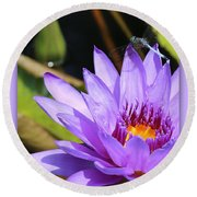 Sweet Dragonfly On Purple Water Lily Round Beach Towel