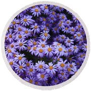 Sweet Dreams Of Purple Daisies Round Beach Towel