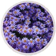 Sweet Dreams Of Purple Daisies Round Beach Towel