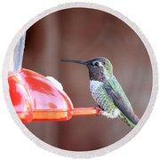 Sweet Little Hummingbird On Feeder Round Beach Towel