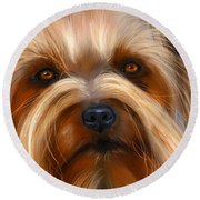 Sweet Silky Terrier Portrait Round Beach Towel