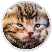 Sweet Small Kitten  Round Beach Towel