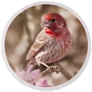 Sweet Songbird Round Beach Towel