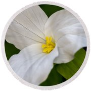 Sweet White Trillium 5 Round Beach Towel