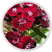 Sweet William Named Sooty Round Beach Towel