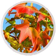 Sweetgum Leaves In Autumn Round Beach Towel