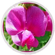 Sweetpea Flower Upclose Round Beach Towel