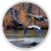 Sweetwater Heron In Flight Round Beach Towel