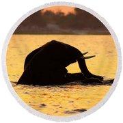 Swimming Kalahari Elephants Round Beach Towel