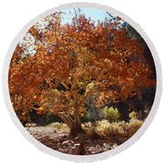 Sycamore Trees Fall Colors Round Beach Towel