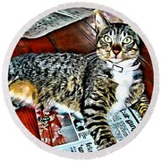 Tabby Cat On Newspaper - Catching Up On The News Round Beach Towel
