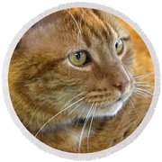 Tabby Cat Portrait Round Beach Towel