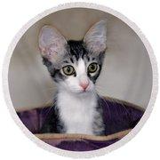 Tabby Kitten In A Purple Bed Round Beach Towel