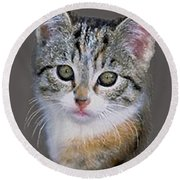 Tabby  Kitten An Original Painting For Sale Round Beach Towel